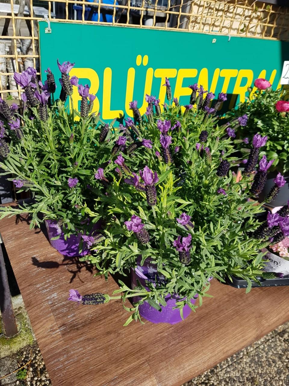 News von Blütentraum - Lust auf Farben ? Wir haben den Frühling